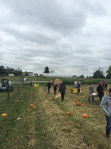 Spreading pumpkins around the patch